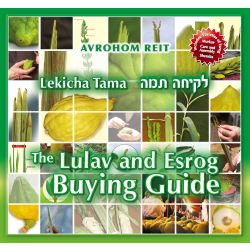 Lekicha Tama: The Lulav and Esrog Buying Guide